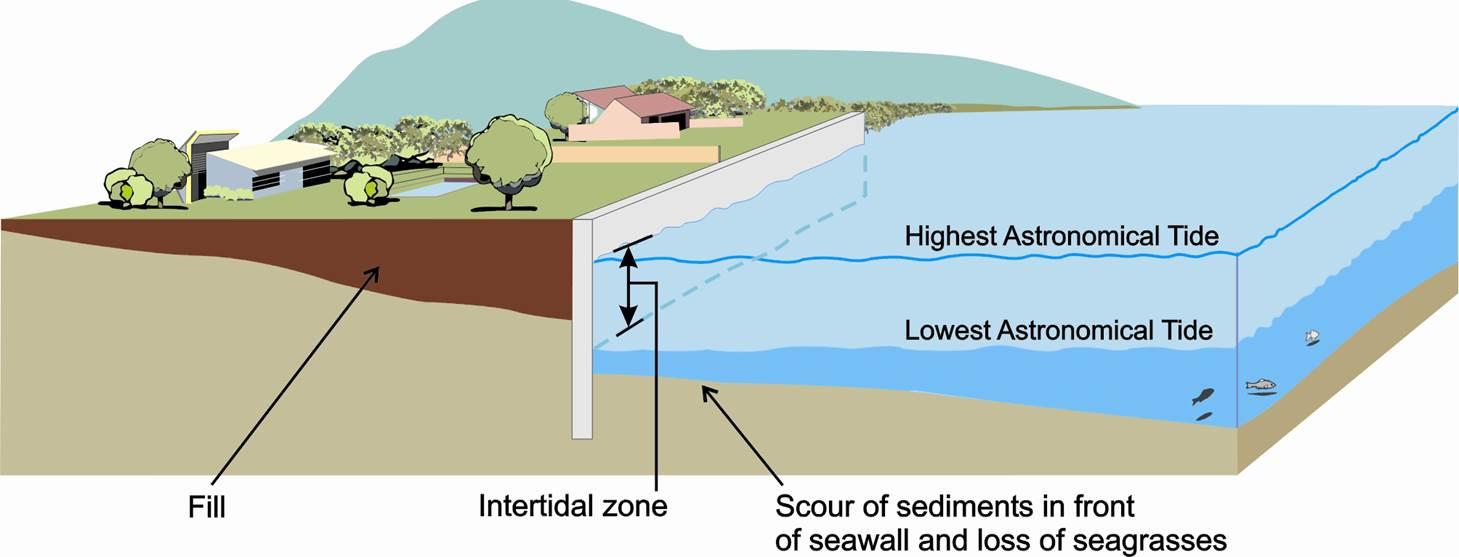 environmentally friendly erosion protection: seawalls (fish friendly